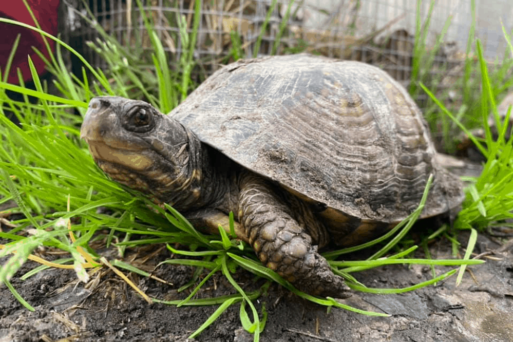 what do you need for a box turtle habitat