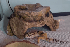 leopard gecko cage decor