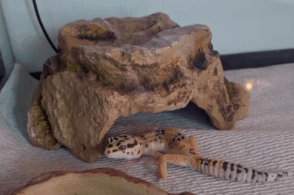 leopard gecko cage decor