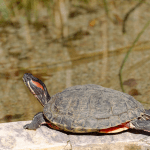 turtle shell care products