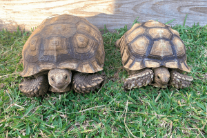tortoise care for beginners