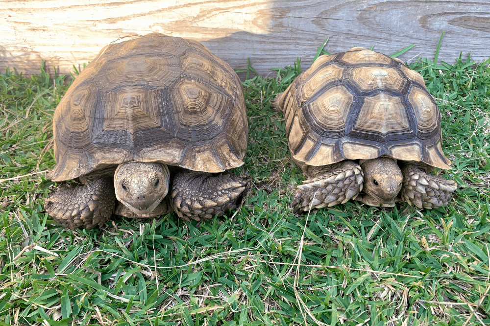 tortoise care for beginners