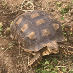 Similarities And Differences Between Turtles And Tortoises