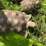 are tortoises good pets
