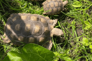 are tortoises good pets