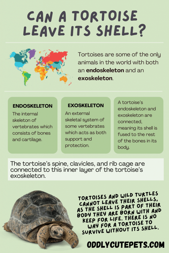 turtle shell infographic