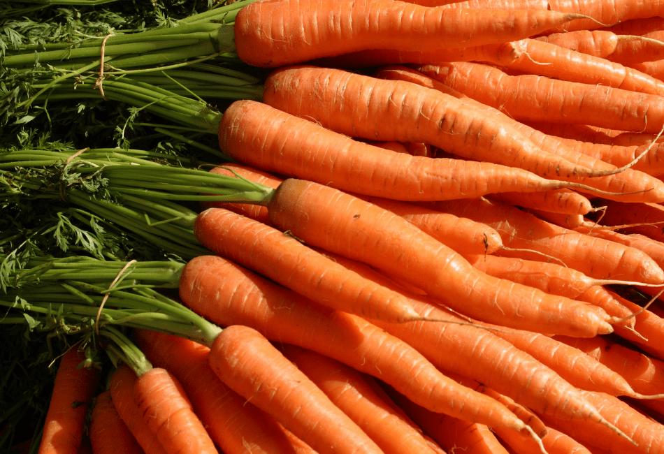 can i feed my bearded dragon carrots 2