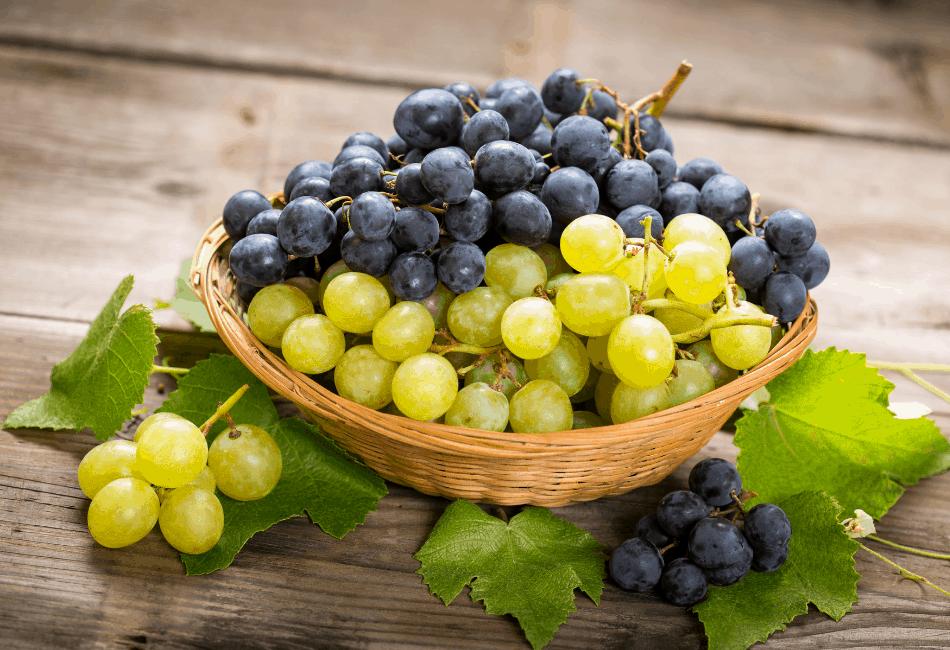 pouvez-vous nourrir des raisins de dragons barbus 2