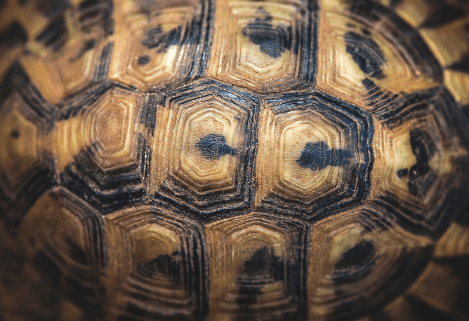 turtle shell diseases 2