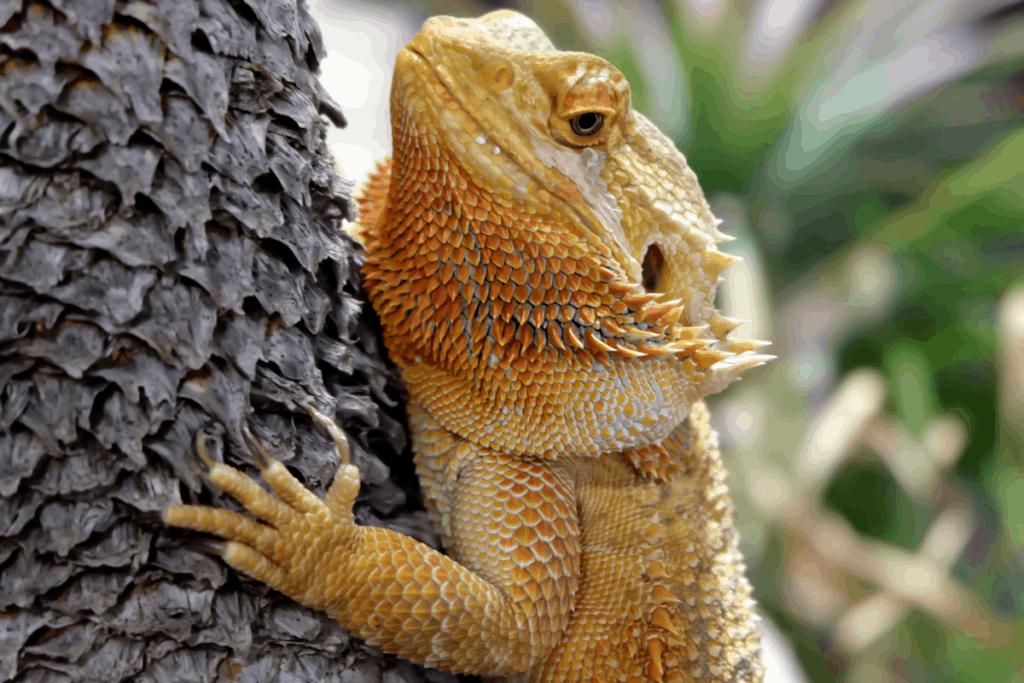 bearded dragon enrichment 1
