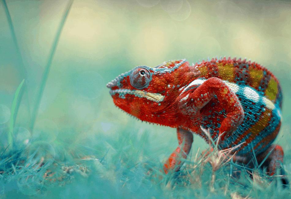 chameleon archive