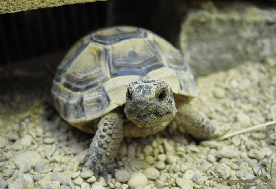 general turtle tortoise archive
