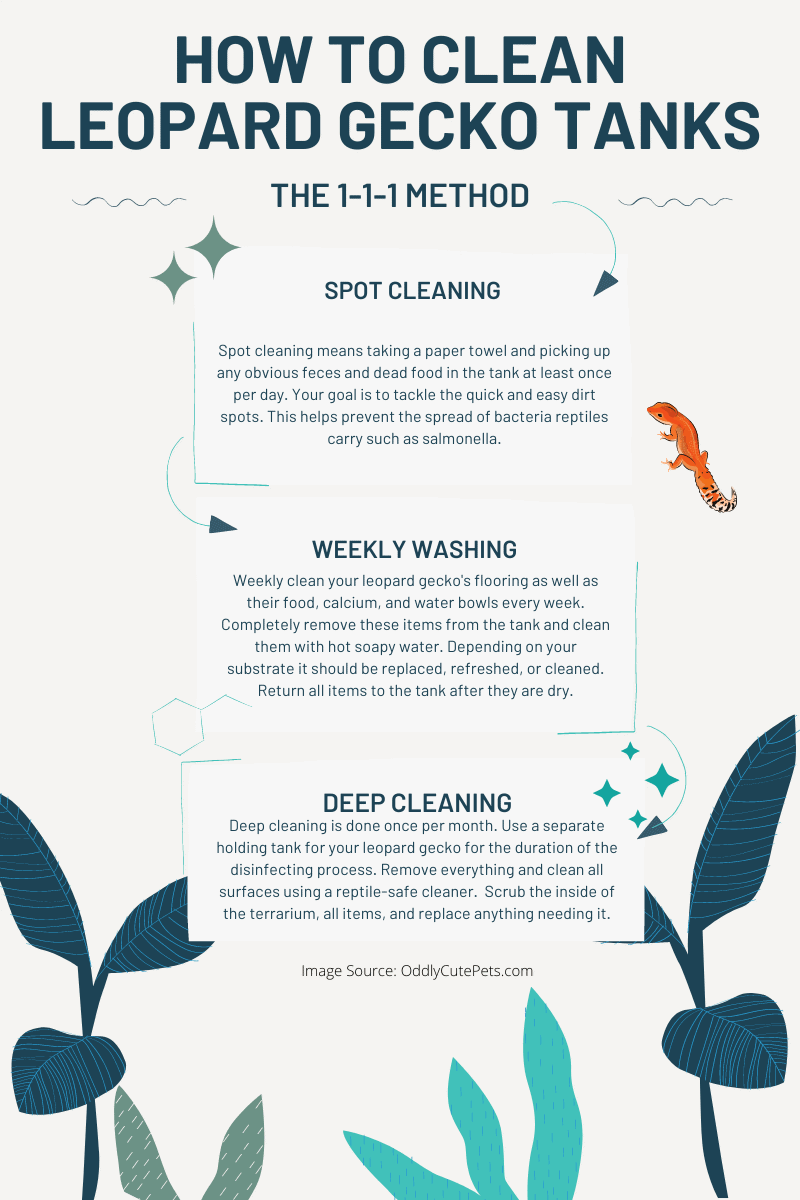 how to clean leopard gecko tanks infographic