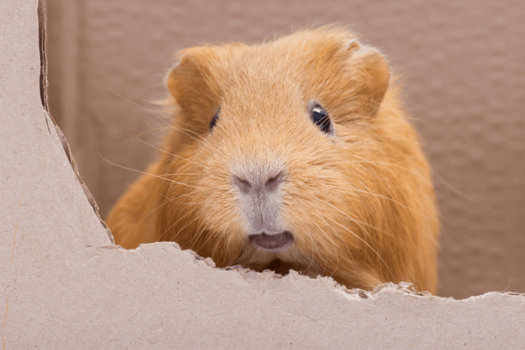 rodents archive