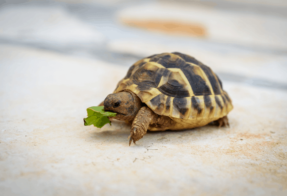 turtle archive