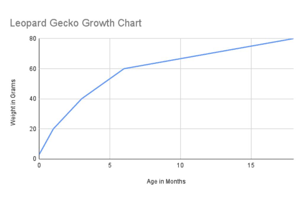 leopard gecko growth chart (2)
