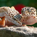 leopard gecko tank mates