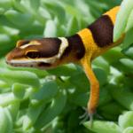 leopard gecko terrarium plants