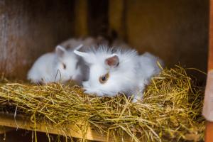 guinea pig bedding alternatives 1