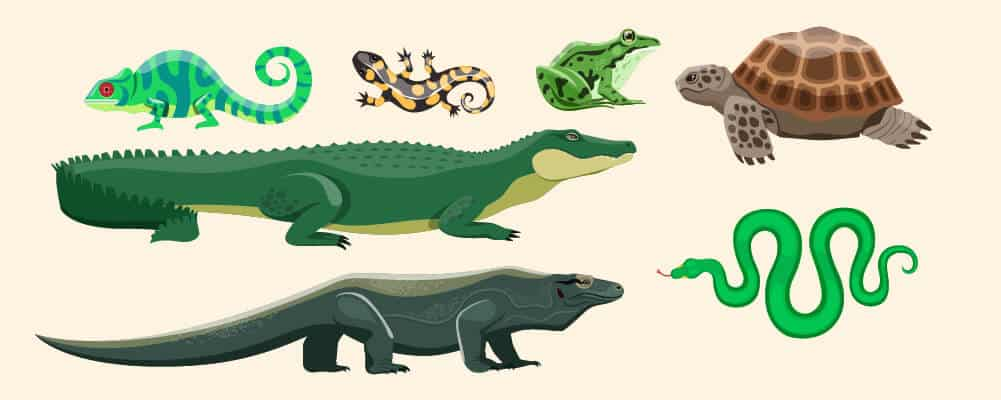 bunch of reptiles and amphibians