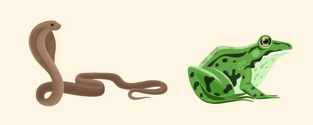 A cobra and a frog