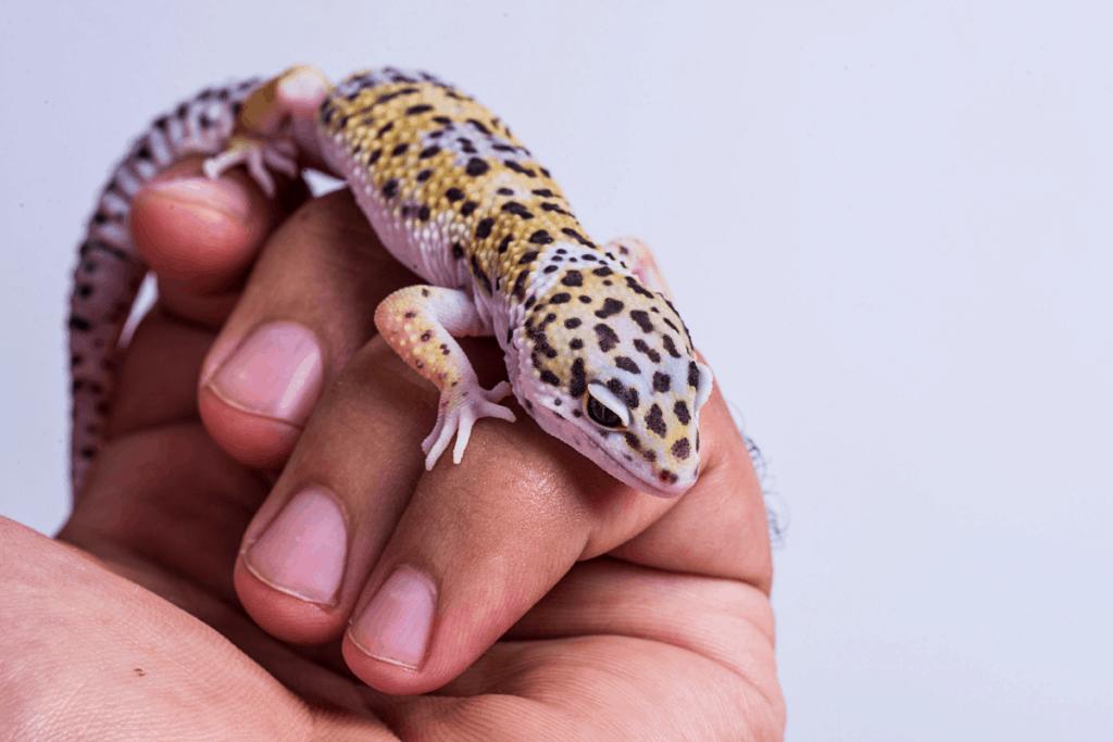 best leopard gecko food 2
