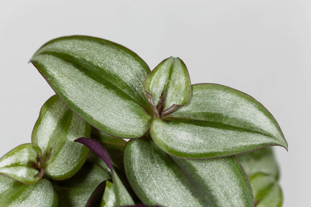 best plants for chameleons inchplant