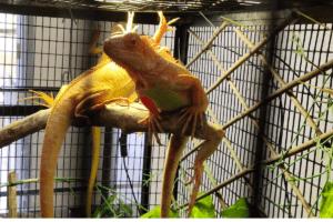 how to build a reptile terrarium