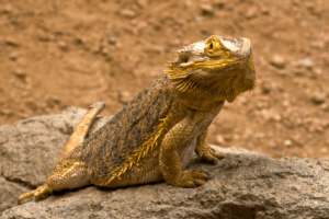 how to lower humidity in bearded dragon tank 1