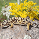 what do you need for a leopard gecko